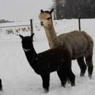 Alpacolor Winterspass